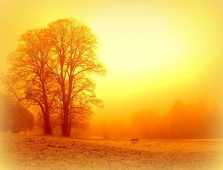 Yellow Winter Sunrise by The Creative Minds Art and Photography