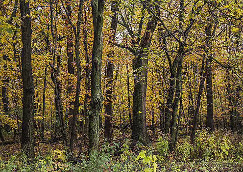 Yellow Woods on a Rainy Day by Karen Casey-Smith