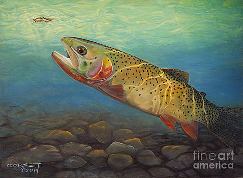 Yellowstone Cut takes a Salmon fly by Rob Corsetti