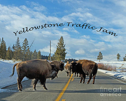 Yellowstone Traffic Jam by Lloyd Alexander-Pictures for a Cause