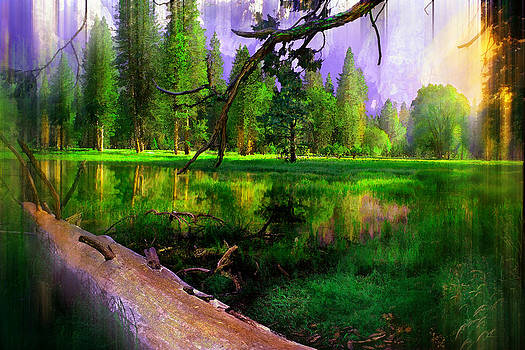 Yosemite Morning by Michael Cleere