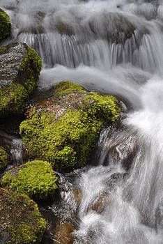Jeff Brunton - Yosemite NP Fern Springs 06