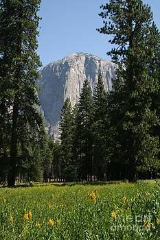Yosemite by Susan Meade