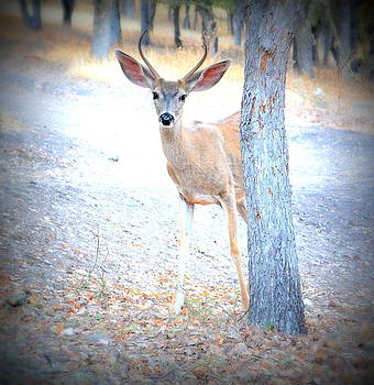 Young Buck by Brooke Clark