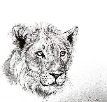 Young lion portrait by Vanessa Lomas