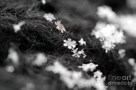 Young Snowflake by Stacey Zimmerman