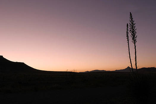 Yucca at Sunset by Cheryl Ann Quigley