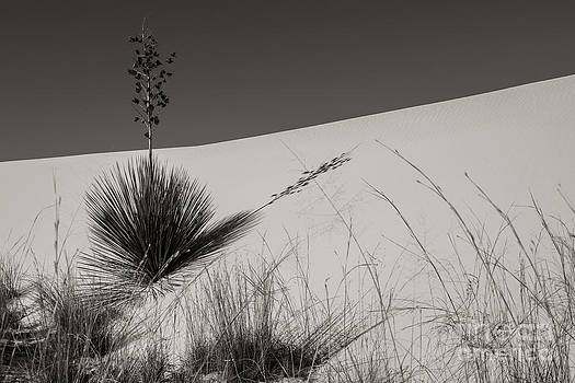 Yucca in the Sand I by Sherry Davis