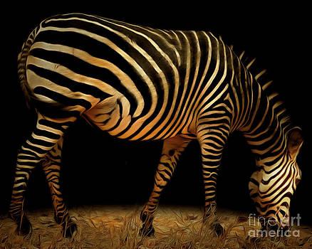 Wingsdomain Art and Photography - Zebra 20150210brun