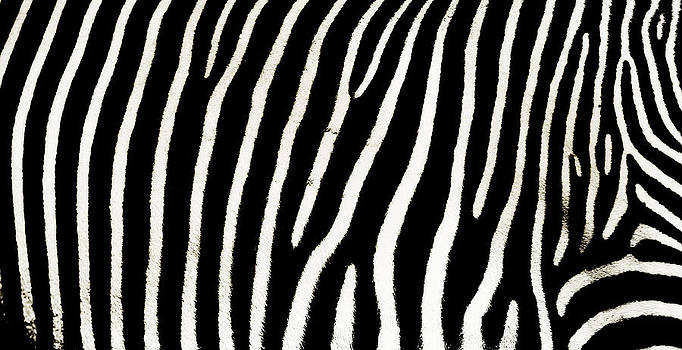 Jenny Rainbow - Zebra Abstract