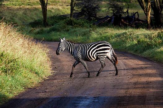 Zebra Crossing by Matthew Bruce