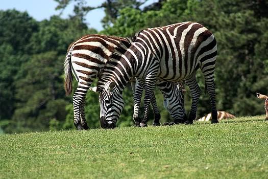 Ramabhadran Thirupattur - Zebra Crossing