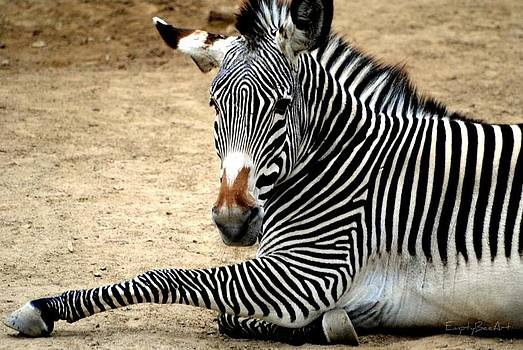Zebra by Empty Bee Artwork  And Photography
