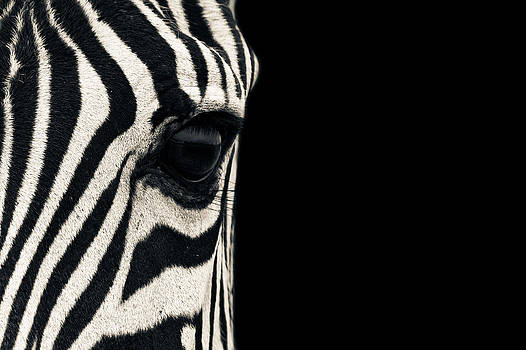 Zebra Eye by Mario Moreno