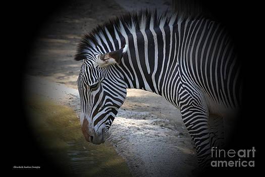 Chuck Kuhn - Zebra I