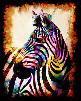 Zebra In Color by Mark Compton