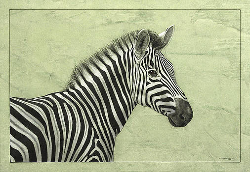 James W Johnson - Zebra