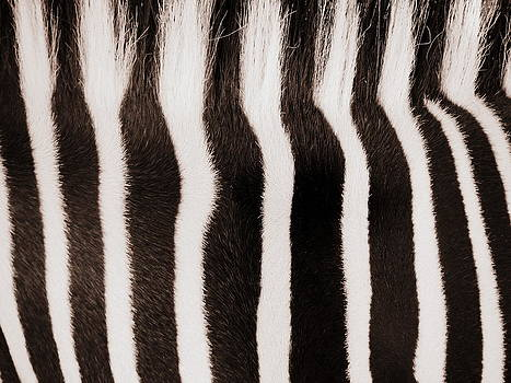 Ramona Johnston - Zebra Mohawk