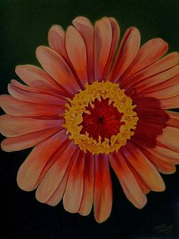 Zinnia in the Sun by Sharon Challand