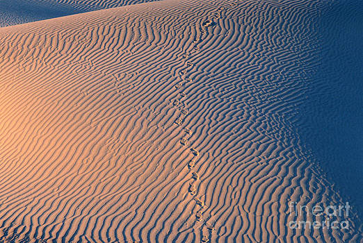 Sandra Bronstein -  Tracks at First Light in Death Valley
