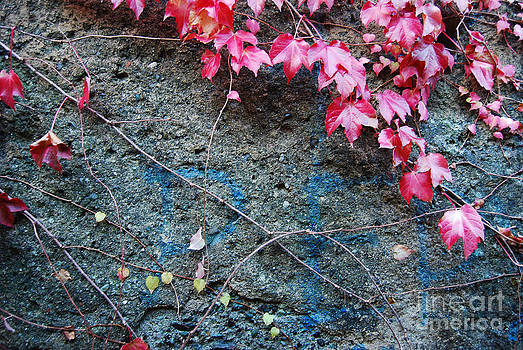 Autumn 14 by Elena Mussi