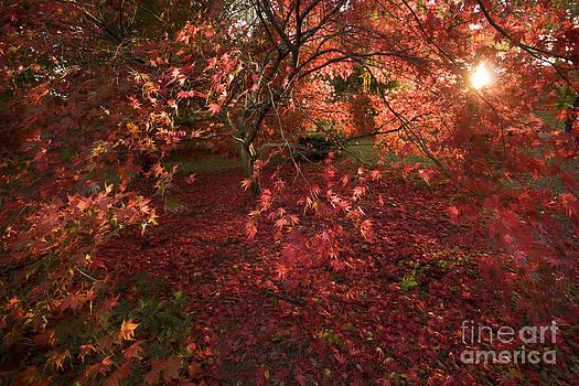 Angel  Tarantella - Autumn colors