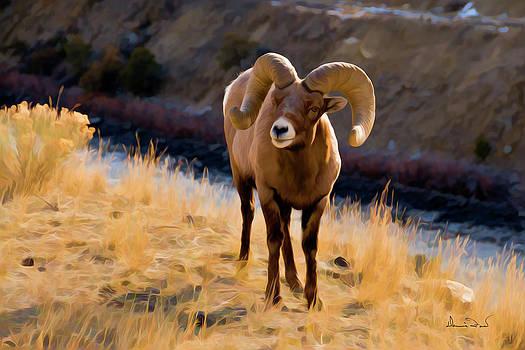 Bighorn Sheep near Yellowstone by Dennis Fast