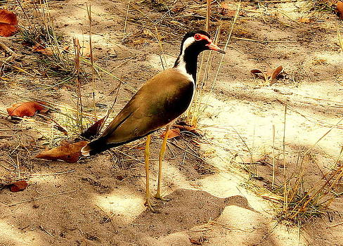 Bird by Manaswinee Mohanty