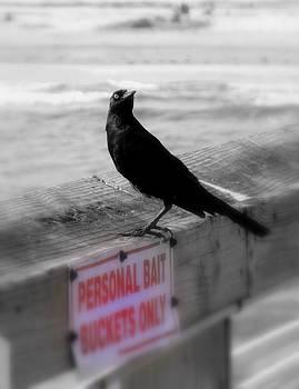 Black Bird by Tom Page