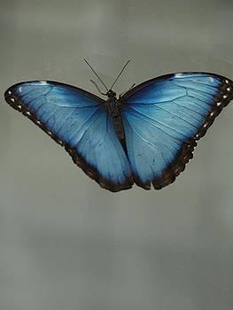 Debi Ling - Blue Butterfly