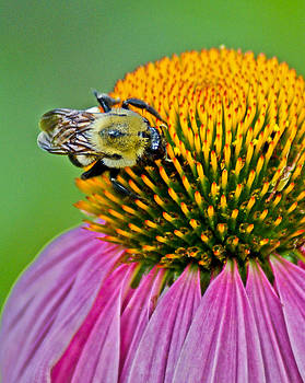 Busy Bee by Margaretha Brooks