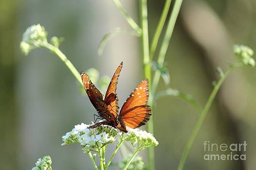 Butterfly Love by Theresa Willingham