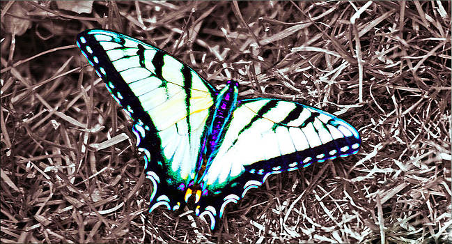 Butterfly Resting by Janet G T