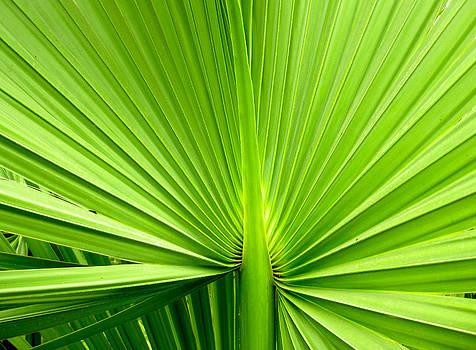 Cayman Greens by Phachesnie Studio