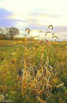 Corn Fields by Katina Cote