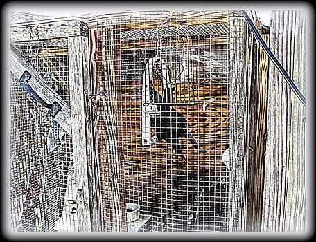YoMamaBird Rhonda - Crow in Rehab
