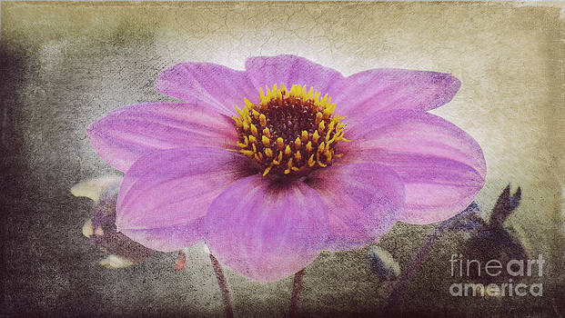 Angela Doelling AD DESIGN Photo and PhotoArt - Dahlia Impression