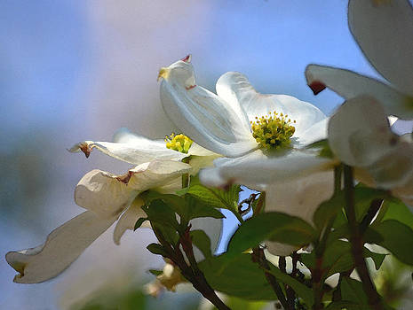 Dogwoods Against The Sky by Sandi OReilly