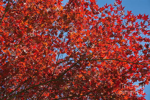 Fall colors by Tomaz Kunst