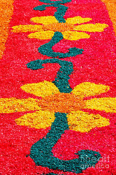 Gaspar Avila - Flower carpets