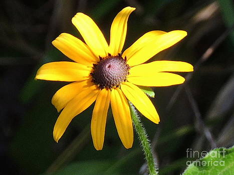Flower by Cristy Crites