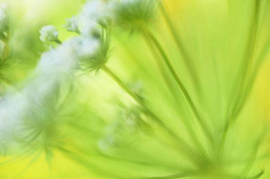 Garden flower by Silke Magino