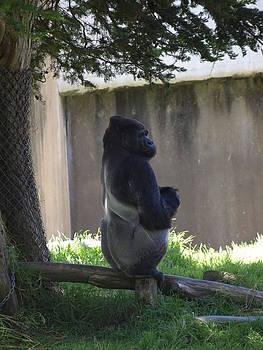 Debi Ling - Gorilla at peace