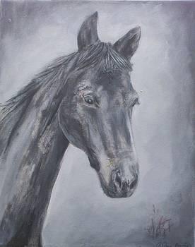 Grey Dawn by Rebecca Bourke