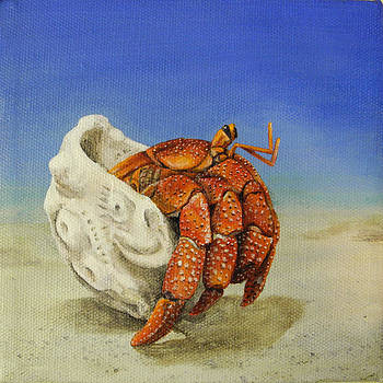 Hermit Crab by Cindy D Chinn