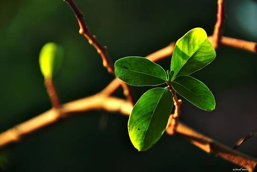 Leaves by Vinod Nair
