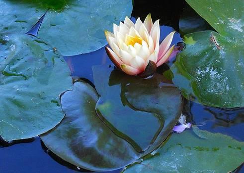 Lotus 2 by Sarah Vandenbusch