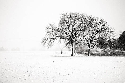 Mid Winter- Kent County Ontario by Mark Clifford
