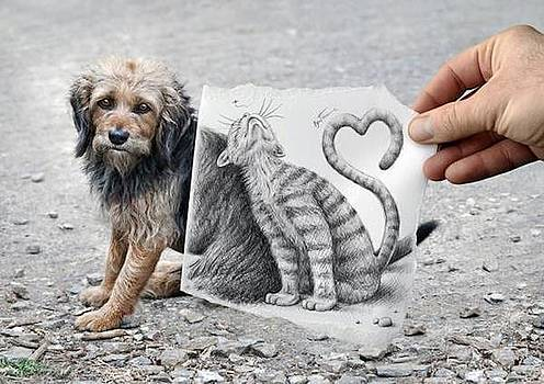 Mixed cat and dog life drawing by Sunkies Fang