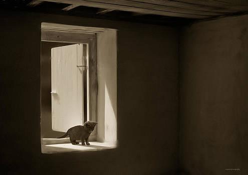 Night Prowler by Ron Jones